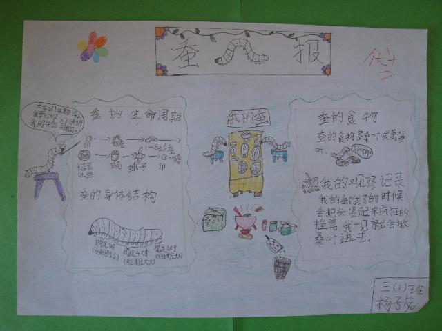 三年级蚕的一生手抄报 科学手抄报蚕的一生 关于蚕一生的手抄报