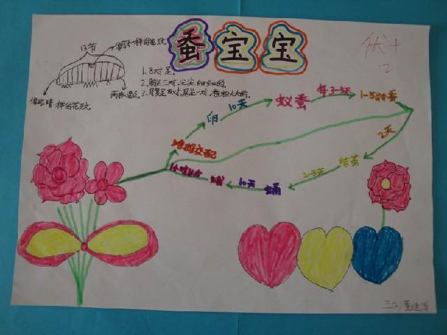 凤仙花的手抄报图片内容凤仙花的手抄报图片图片