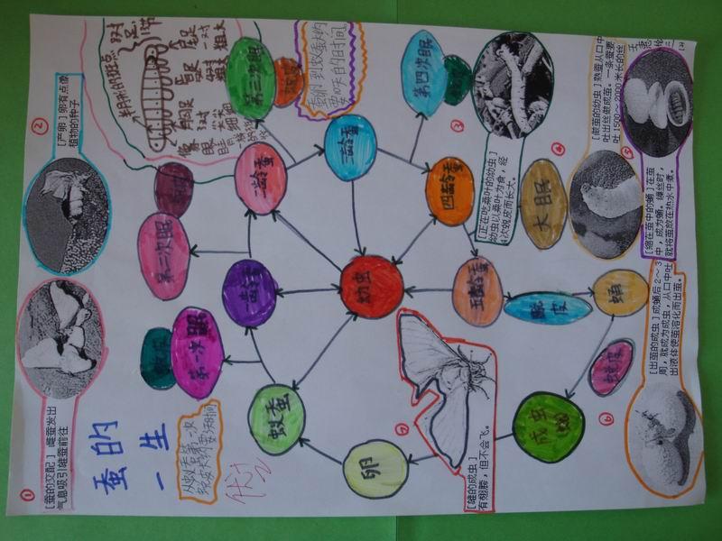 科学课《蚕的一生》手抄报欣赏 2012-09-05